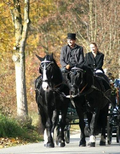 Zweispänner, Kutscher, Pferdekutsche, Pferdegespann, Hochzeitskutscher, Festwagen,